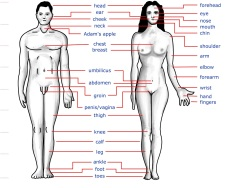 Perkembangan tubuh manusia